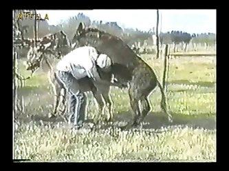 Donkey 3 4 5 1