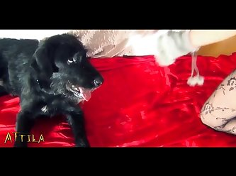 K9lady Ariel Christmas Night (part 4)