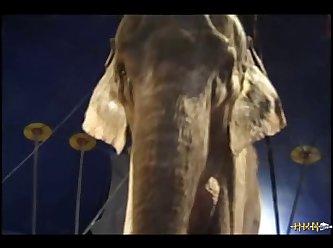 Elephant 2 (part 5)