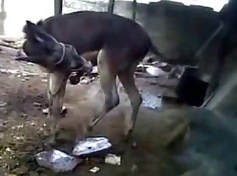 Burro Hoofing Off W Cumshot Youtube