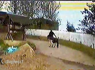 xxx horse (part 1)