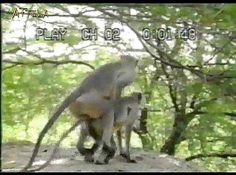 46abda Monkey