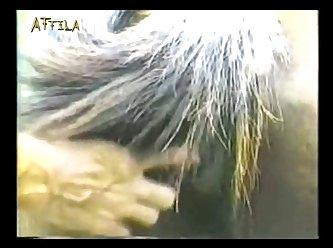 Animal Cigano (part 3)